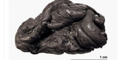 5700 yıllık sakız